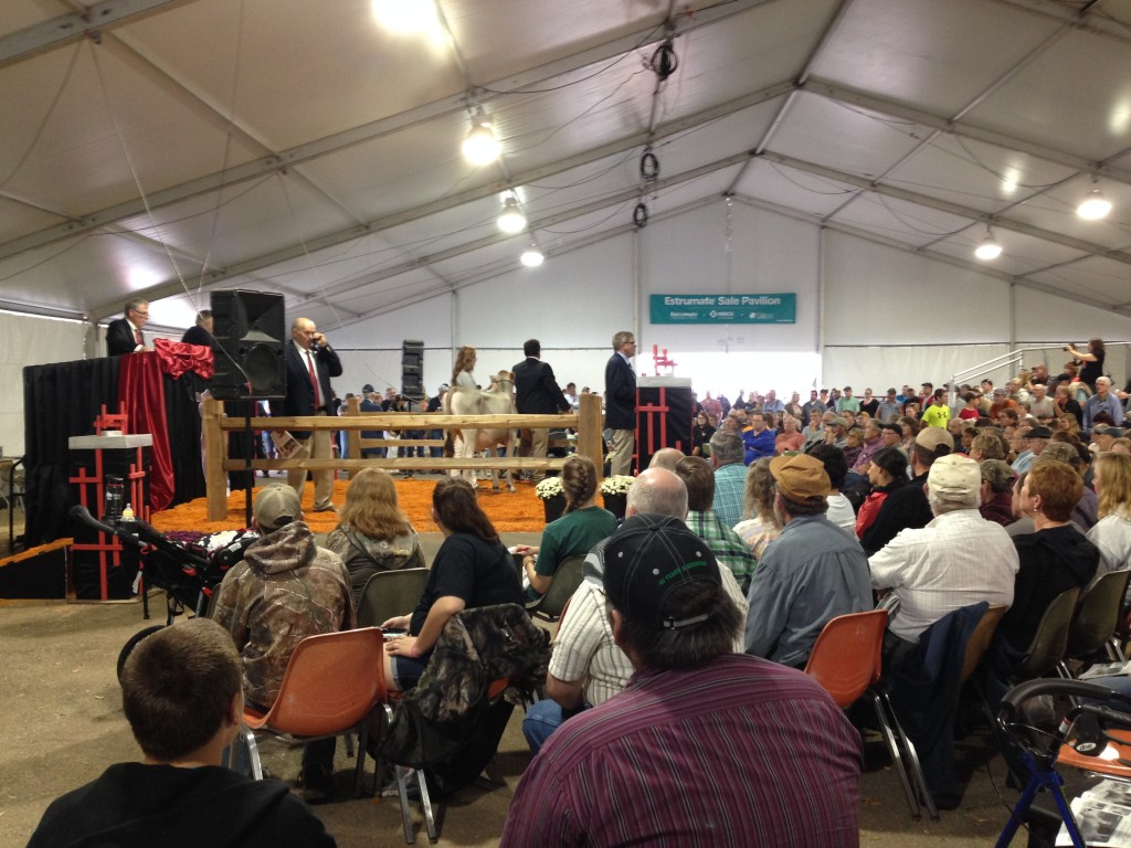 Another Full House for The 2014 World Premier Sale