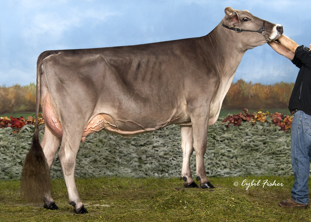 Dam: CUTTING EDGE ELITE FAYANN E90/90ms Int. Champion International 2014. Dam of Cutting Edge Thunder Faye V89/90ms All American Sr. 2 2016